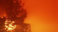 Lone tree at sunrise - stock footage