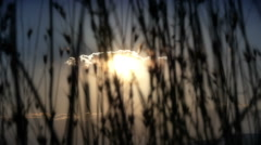 sunset grass - stock footage