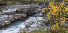 Autumn colours at the Abiskojakka river Abisko National Park Norrbotten County - stock photo