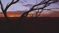 Australian outback red sunset desert. Tree silhouette 4K AVAILABLE Stock Footage