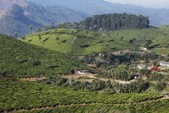 settlement of tea pickers, tea plantations, highlands around munnar, western  - stock photo