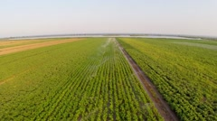 Irrigation of vegetables aerial view - stock footage
