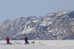 Two men, mushers running, driving a dog sled, team of sled dogs, alaskan husk Stock Photos