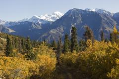 indian summer, poplar trees in fall colours, hiking trail, view from sheep mo - stock photo