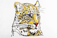 Tiger, drawing, artist, gerhard kraus, kriftel Piirros