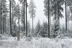 Winter forest in the taunus, hochtaunus nature reserve, hesse, germany, europ Stock Photos