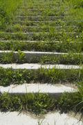 stairs overgrown with grass - stock photo