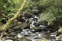 creek near torc waterfall, killarney national park, county kerry, ireland, br - stock photo