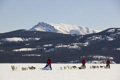 Three men, mushers running, driving a dog sled, team of sled dogs, alaskan hu Stock Photos