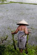 woman wearing a straw hat walking in a rice paddy, 4000 islands, laos, southe - stock photo