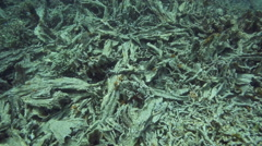Dead and broken corals on reef - stock footage
