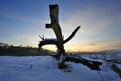 old tree log, sunrise in the naturschutzgebiet isarauen nature reserve at ger - stock photo