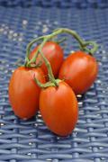 Tomatoes (solanum lycopersicum) Kuvituskuvat