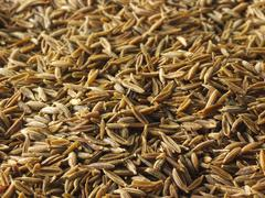 Food photos & pictures of fresh spices  & ground spices  available as stock p Stock Photos