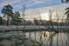Sunrise in a marsh Tiste Bauernmoor Landkreis Rotenburg Lower Saxony Germany - stock photo