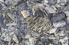 Frost damaged rocks in the Arctic ice desert Zorgdragerfjord Prins Oscars Land - stock photo