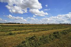 Swathed hay cloudy sky with cumulus clouds Gross Runz Mecklenburg Western Stock Photos