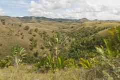 Deforested hills with forests of Travellers Trees or Travellers Palms Ravenala Stock Photos