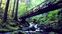 Stock Video Footage of young woman hiking in the forest