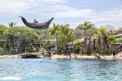 A dolphin jumping high in the air at Seaworld Stock Photos