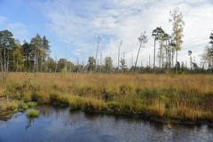 Rewetted peatlands in a bog Tiste Bauernmoor Landkreis Rotenburg Lower Saxony Kuvituskuvat