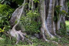Tropical vegetation nahe Beruwala Westkuste Westprovinz Sri Lanka Asia Stock Photos