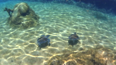 Cool underwater shot of two large sea turtles Stock Footage