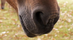Pony sniffing air Stock Footage