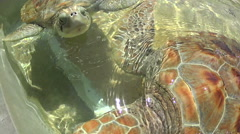 Closeup of large sea turtles Stock Footage