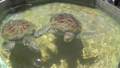 Closeup of two medium sized sea turtles Stock Footage