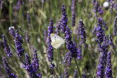 Provence Stock Photos