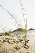 Shells and grass in the dunes Conil de la Frontera Andalusia Spain Europe Stock Photos