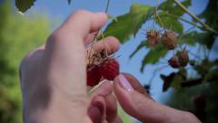 Stock Video Footage Berries Raspberries in the blue sky MACRO - stock footage