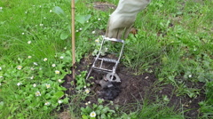 Dead mole animal caught with special gardener trap tool Stock Footage