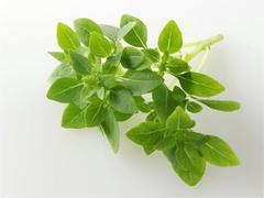Food photos & pictures of  herbs available as stock photos, pictures & images Stock Photos