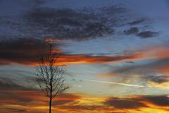 Bare tree against the evening sky sunset with clouds in the sky Upper Swabia Stock Photos