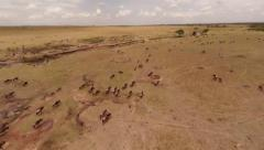 Migration of wildebeest. Shooting with the quadrocopter. Stock Footage