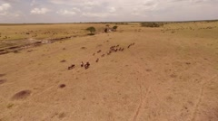 Migration of  Wildebeest. Aerial. - stock footage