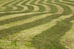 Hayfield raked in geometric patterns Compton Eastern Townships Quebec Province - stock photo