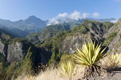 Stock Photo of Agave Agave along the Sentier de la Chapelle route Cilaos La Reunion Reunion
