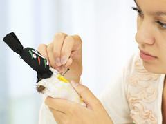 Woman sticking needles into a voodoo doll Stock Photos