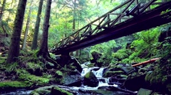 Forest river flowing under a bridge in the ravenna gorge Stock Footage