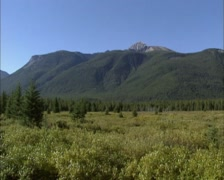 Moose Meadows with willow and dwarf birch + pan Bow valley in Rocky Mountains Stock Footage