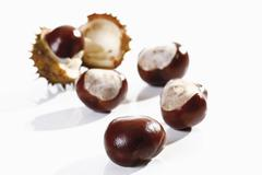 Horse chestnuts (aesculus) Stock Photos
