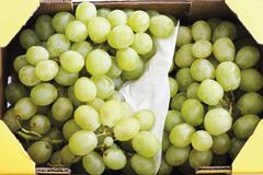 green grapes in a transport carton - stock photo