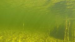 Nordic underwater scenery 2 Stock Footage