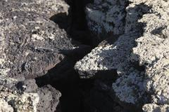 Crack in lava rock with lichens, lanzarote, canary islands, spain, europe Kuvituskuvat