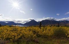Indian summer, leaves in fall colours, kathleen lake, st. elias mountains, kl Stock Photos