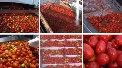 Tomato processing plant collage - stock footage