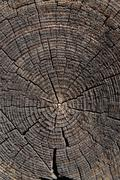 old wood cut - stock photo